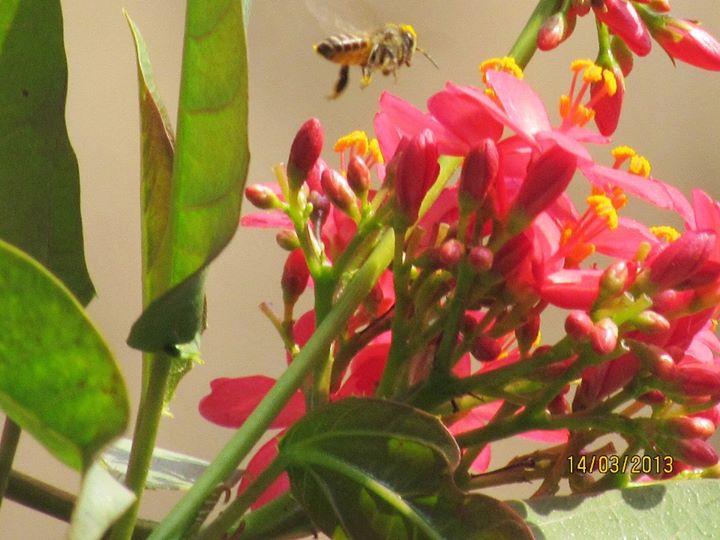 BEE OVER FLOWERS